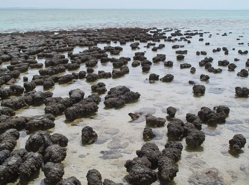 Dating rotsen en fossielen met behulp van geologic methoden volledig gratis dating Schotland