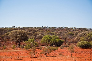 Gone_Driveabout_17_Bush_at_Yuin_Station_Western_Australia_24_Oct__2010_-_Flickr_-_PhillipC.jpg